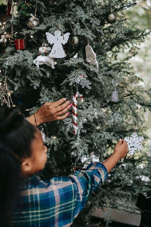 Foto d'estoc gratuïta de acollidor, anònim, any nou, arbre