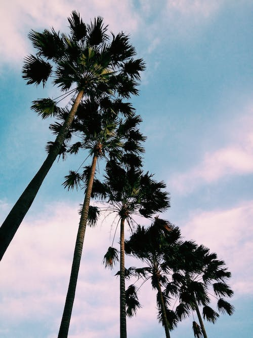 Free stock photo of #tree #summer #sky #landscape #up #green #plant