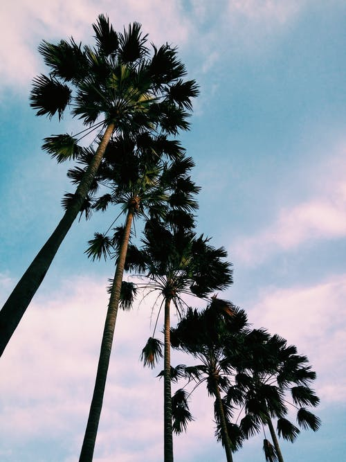 Fotos de stock gratuitas de #tree #verano #sky #landscape #up #green #plant