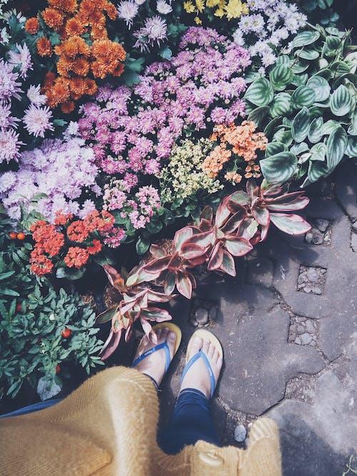 Free stock photo of feet, flippers, flower, green