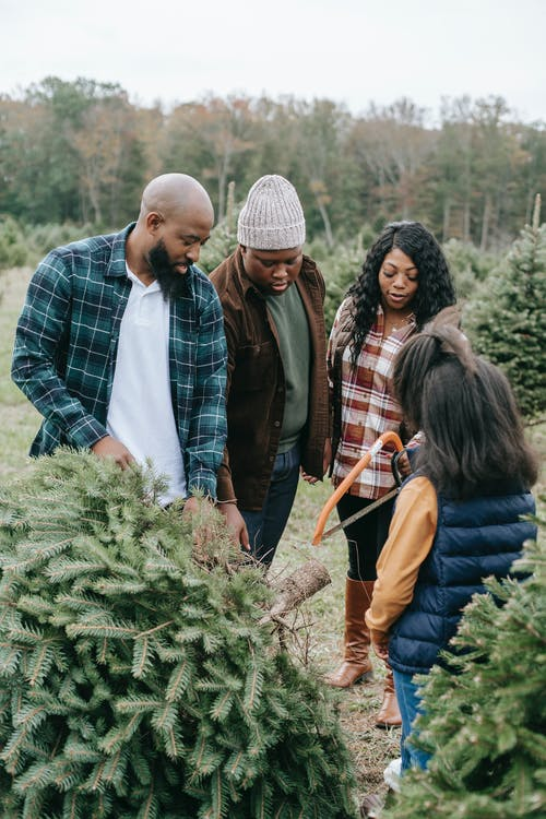 African American family taking part in cutting green coniferous tree with saw in forest