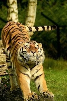 Free stock photo of nature, animal, grass, blur