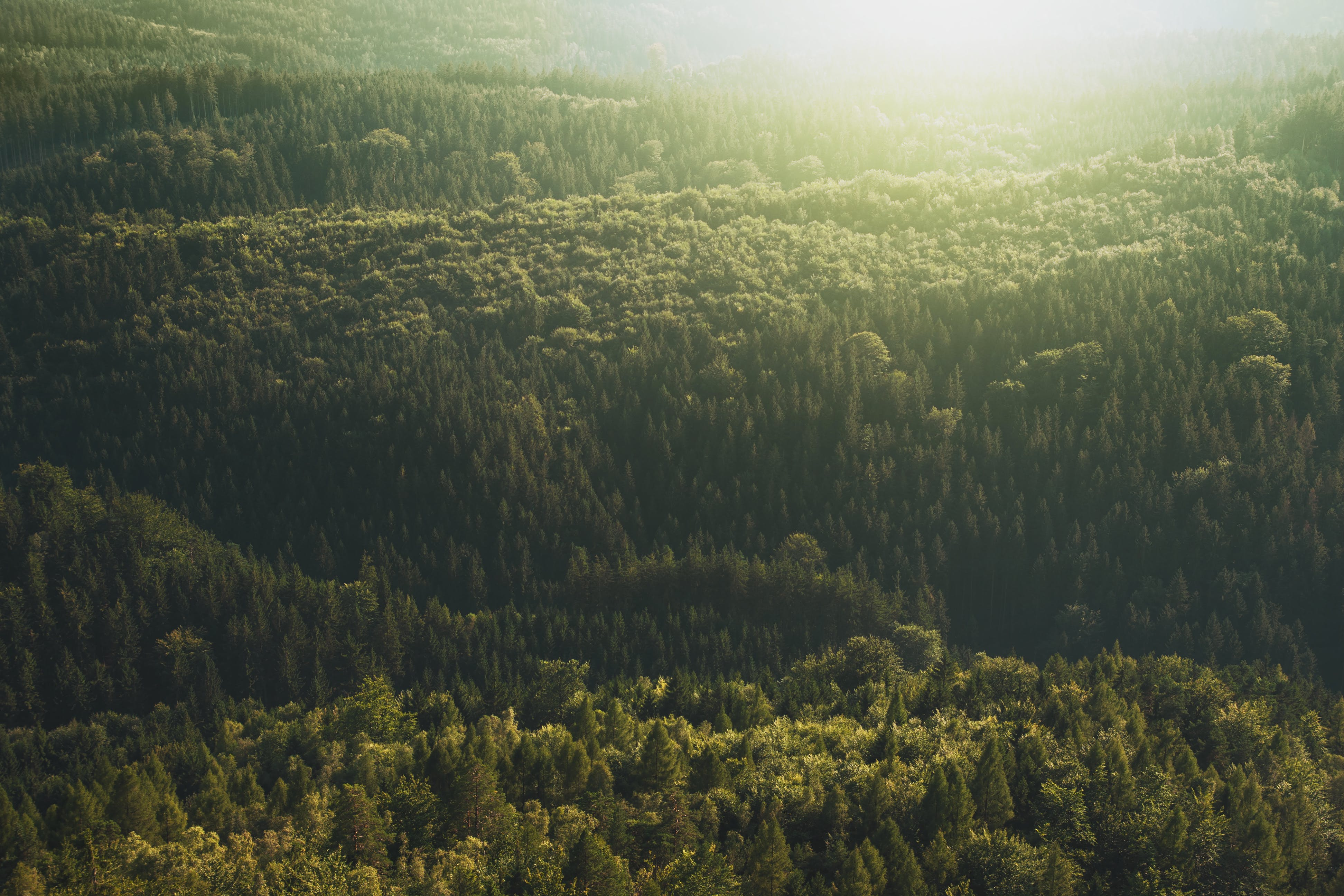 Top-view Photography of Green Forest