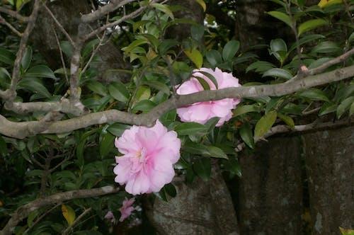 คลังภาพถ่ายฟรี ของ ดอกไม้, บุปผา