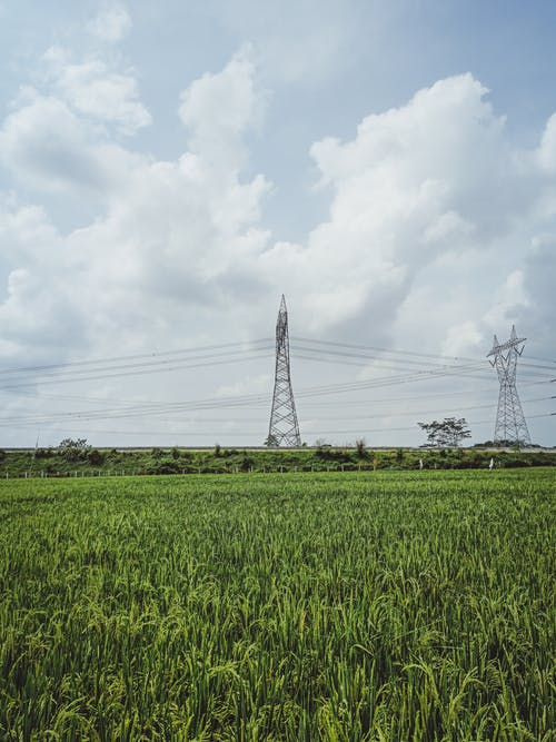 Green agricultural plantation with crops against tall metallic voltage tower connected with electricity wires in farm