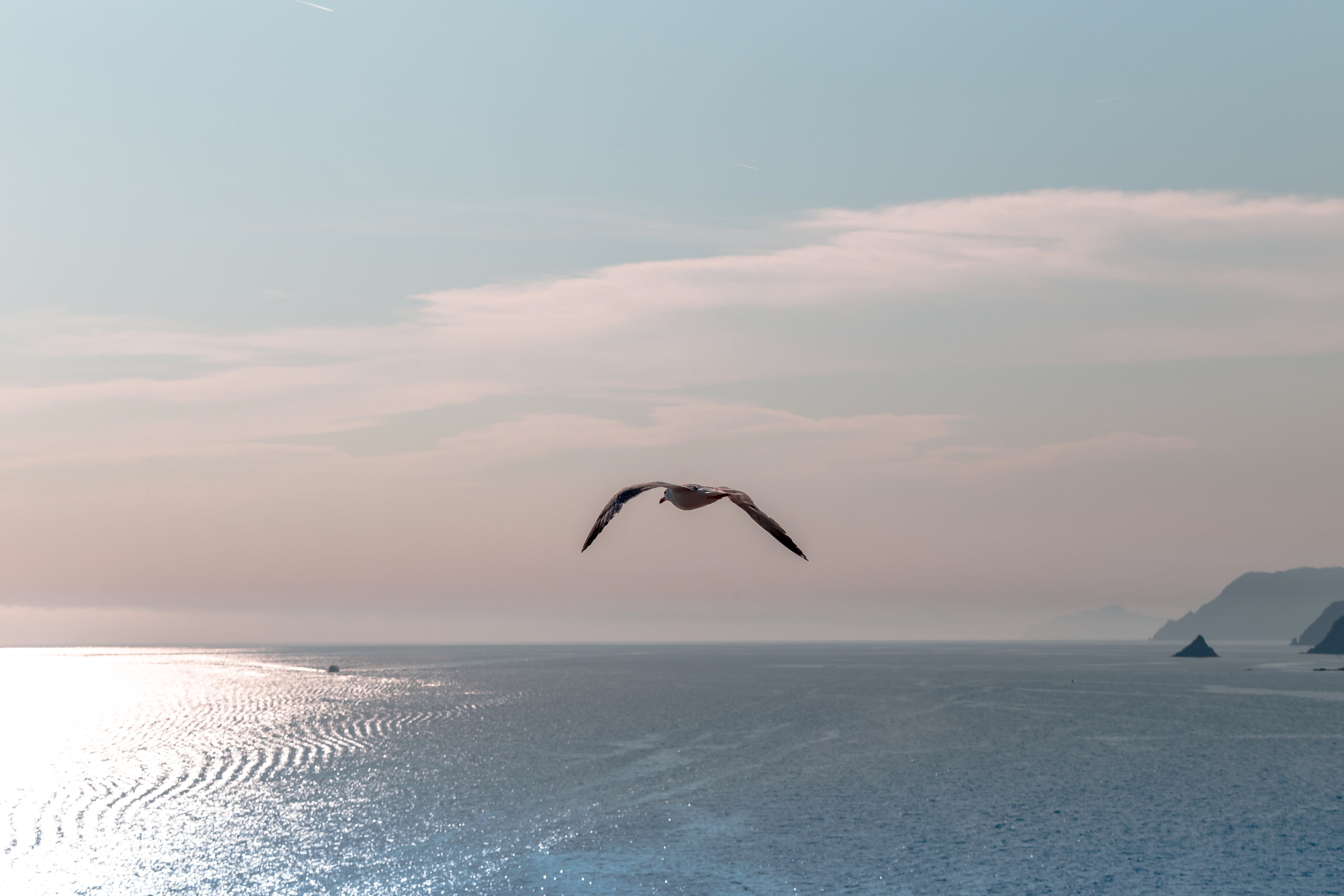 Free stock photo of bird, blue, by the sea, clouds