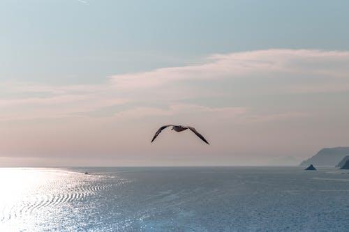 在海邊, 多雲的天空, 日落, 橘色天空 的 免费素材照片