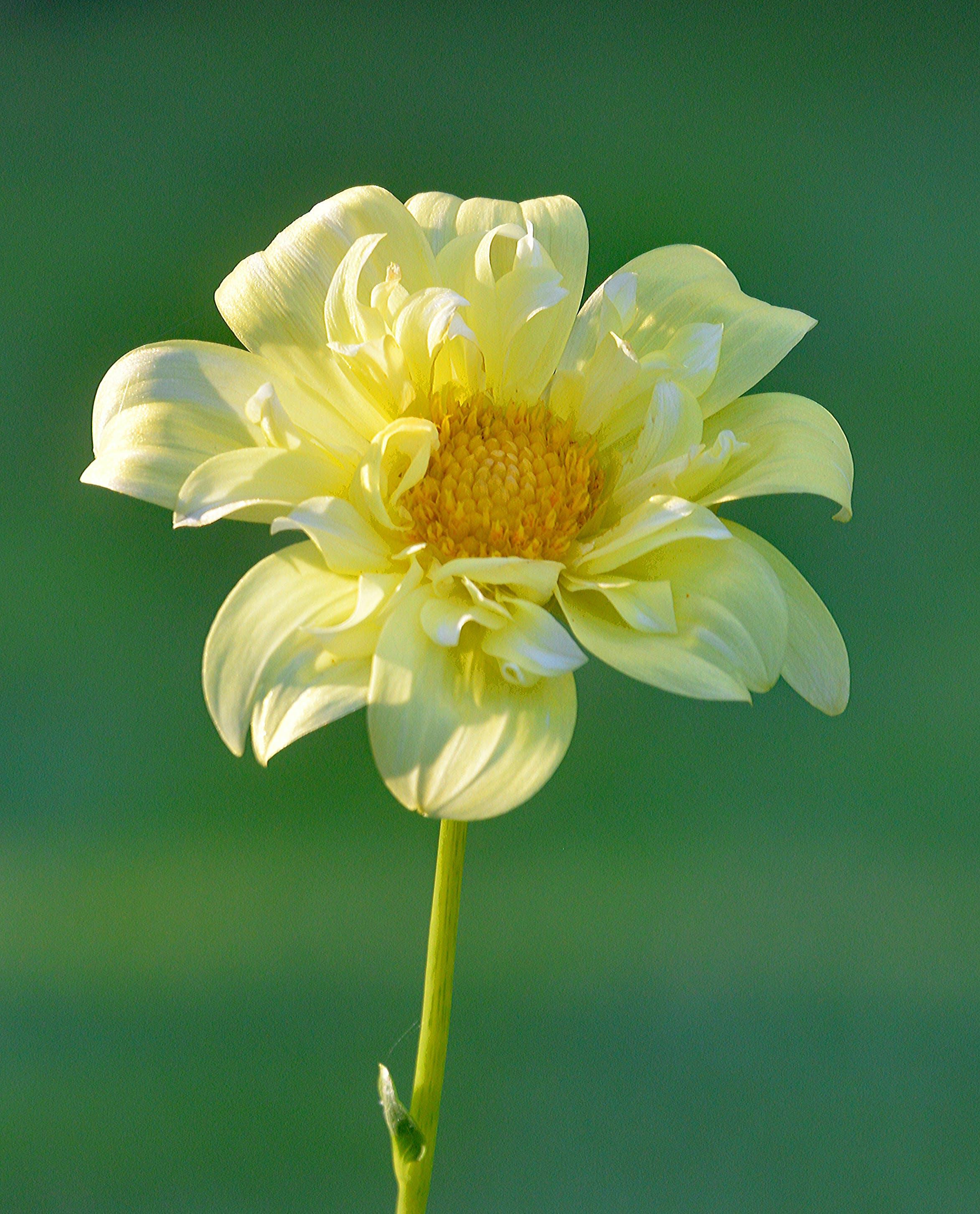 Yellow Petaled Flowering Plant