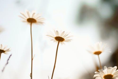 Бесплатное стоковое фото с глубина резкости, лето, лист