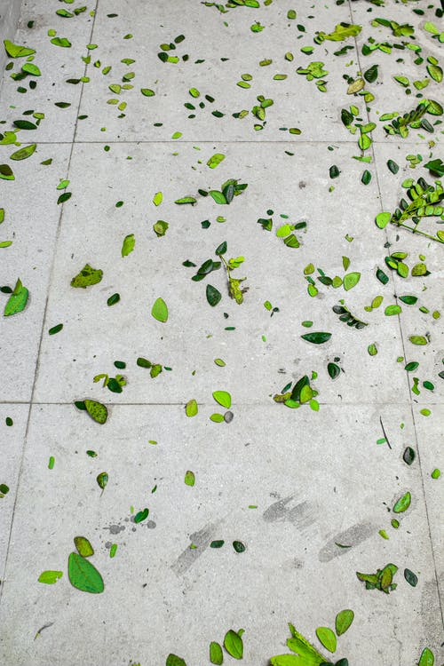 High angle of small green foliage placed on gray stone surface in daylight in city street