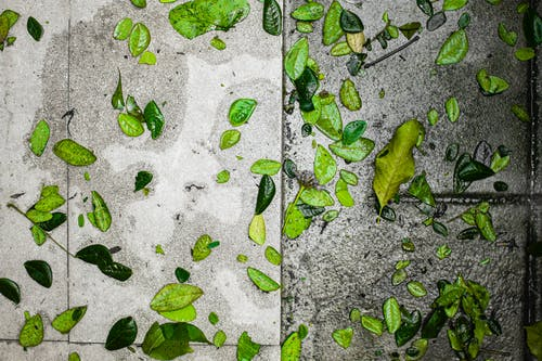 Green foliage on wet pavement in street