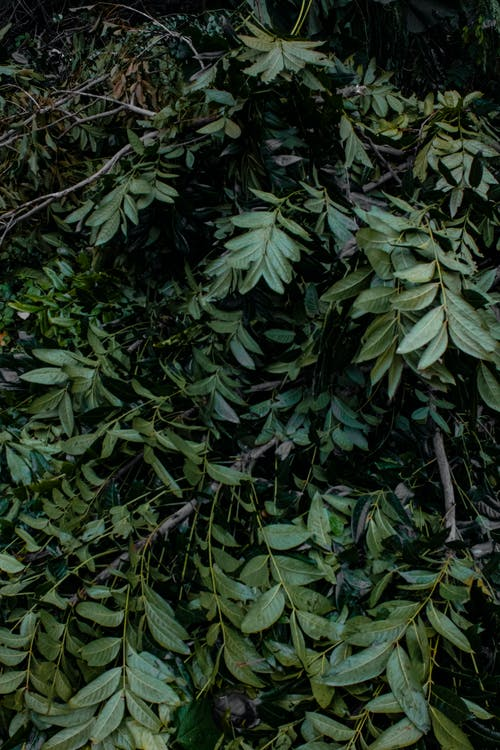 Green bushes with leaves in nature