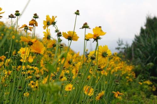 Free stock photo of aperture, aromatic, beautiful flowers, blur
