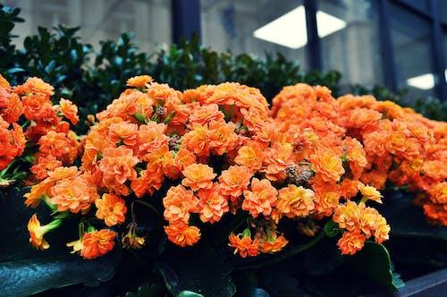 Darmowe zdjęcie z galerii z delikatny, flora, jaskrawy, kwiaty