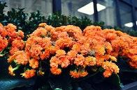 flowers, petals, blur