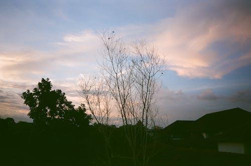 Foto profissional grátis de céu, céu azul, crepúsculo, galhos