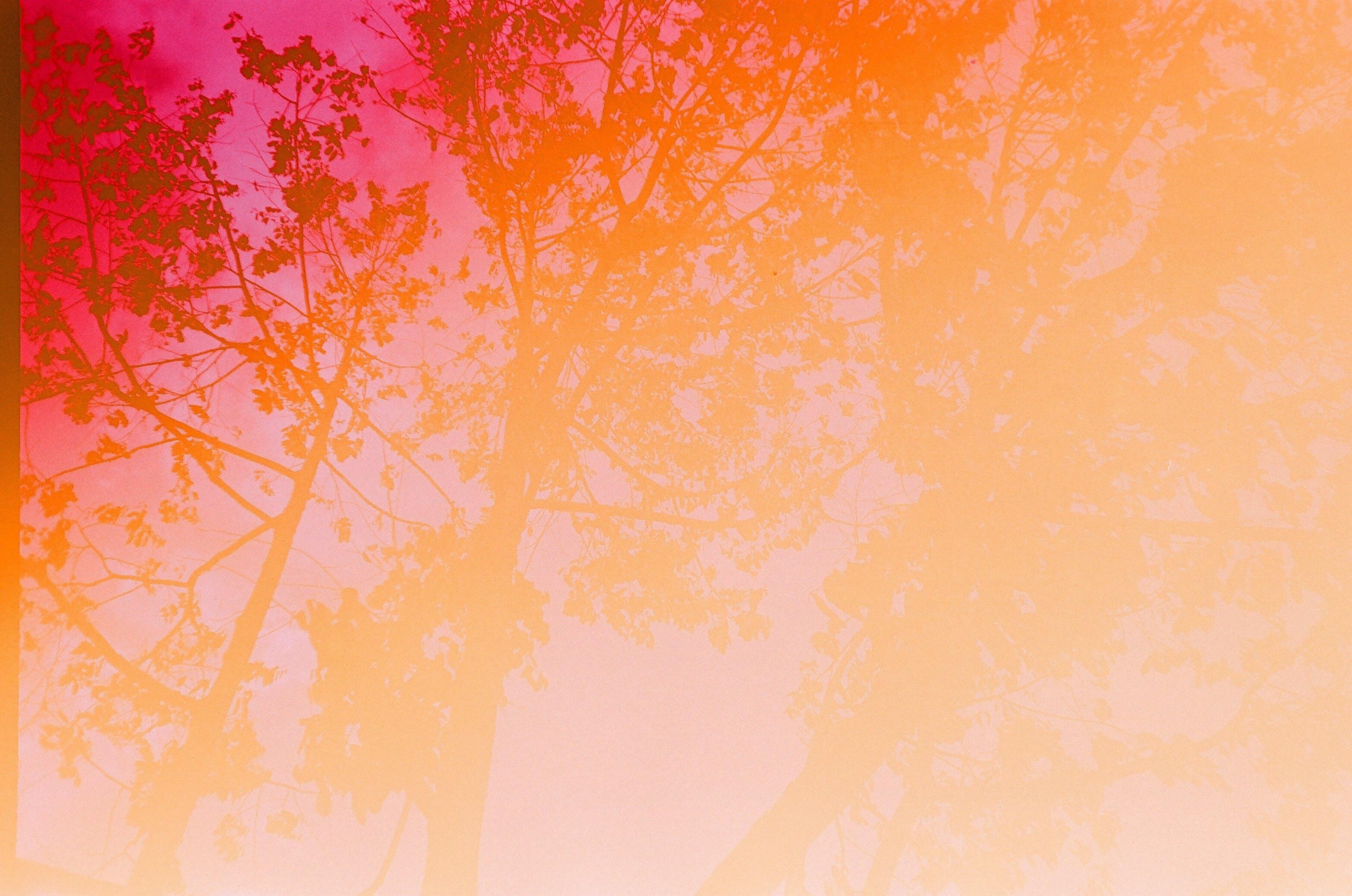 Three Leafed Trees at Daytime