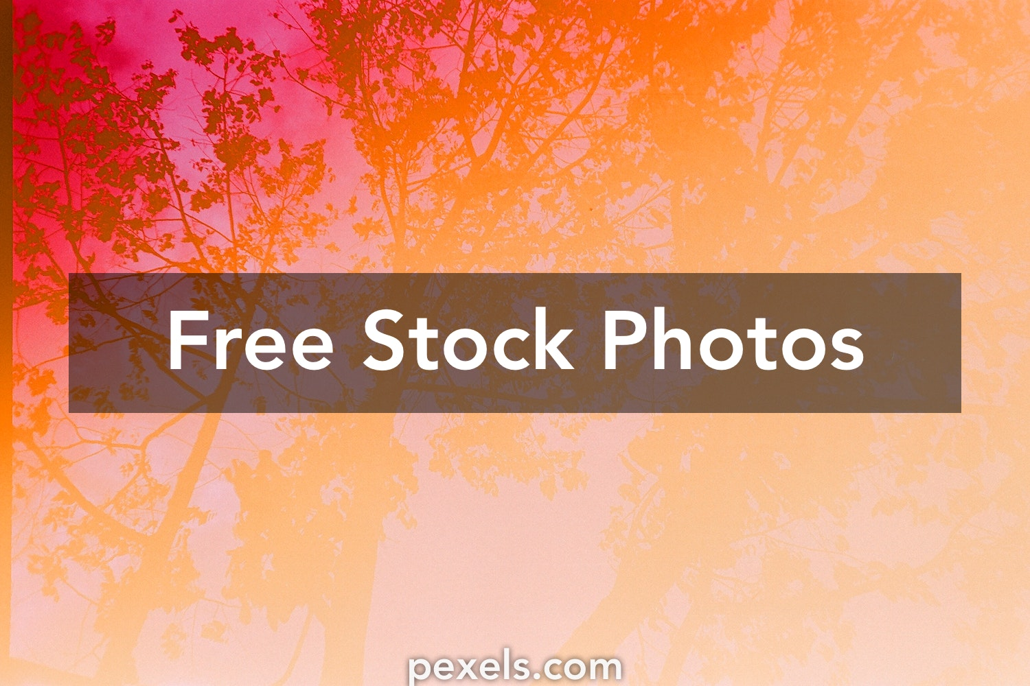 1000 Great Banner Background Photos Pexels Free Stock Photos