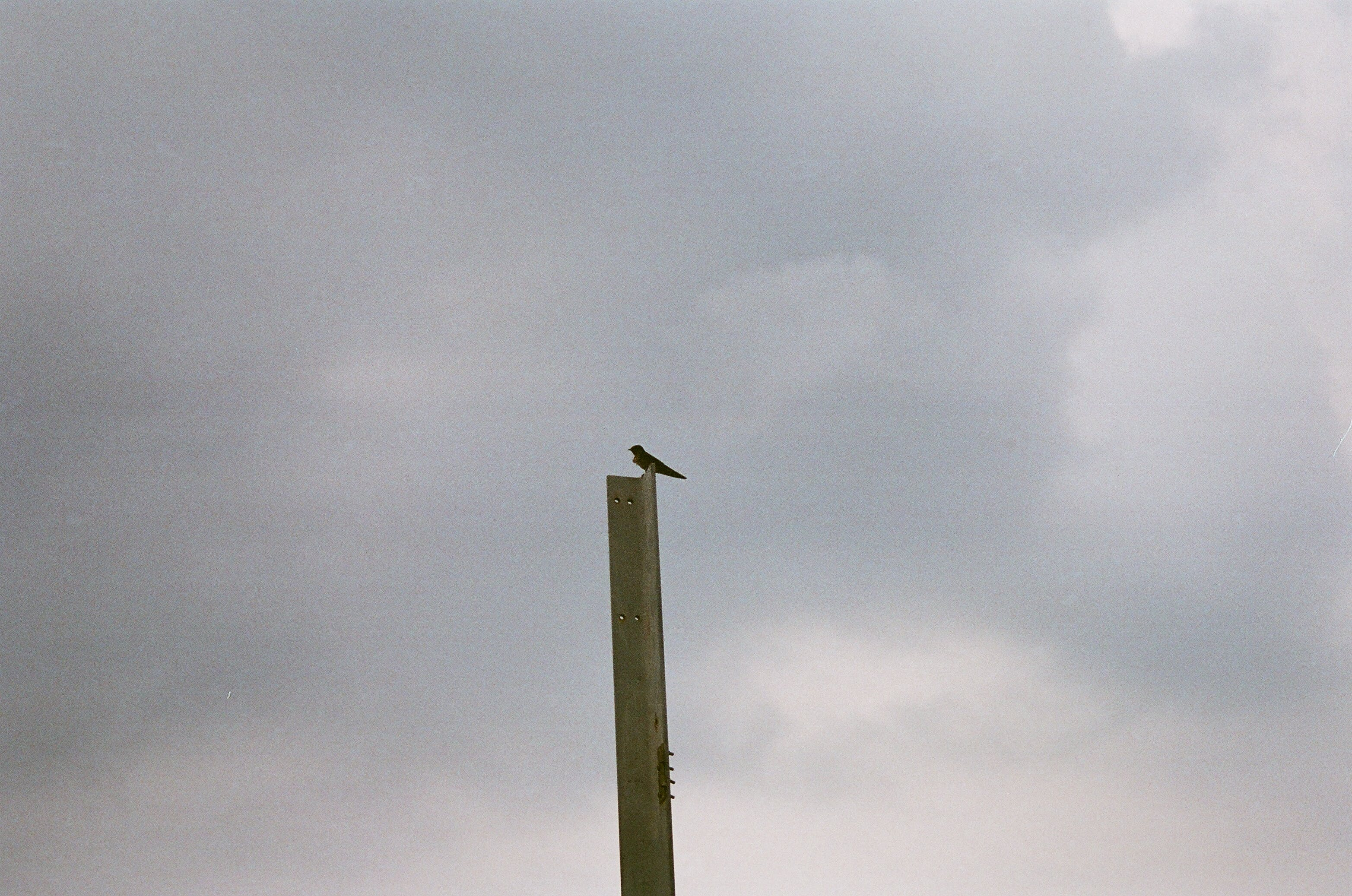 Bird Perching on Metal Beam