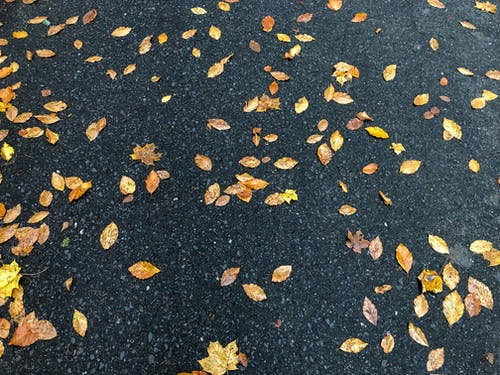 Free stock photo of autumn aesthetic, autumn background, autumn leaves, foot path