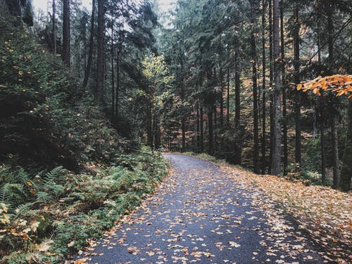 Gray Pathway Between Green Trees