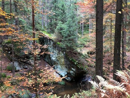 Fotos de stock gratuitas de bosque de otoño, bosque otoñal, colores otoñales
