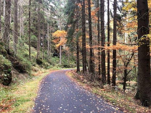 Free stock photo of autumn, autumn aesthetic, autumn background, autumn forest