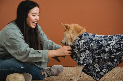 Side view of expressive Asian female owner dressing dog while sitting with crossed legs on floor