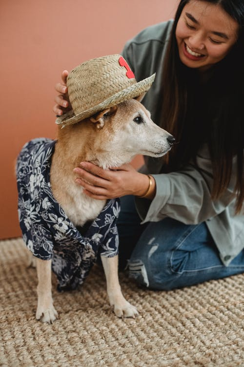 Crop Asian female owner having fun and playing with dog while sitting on floor and pitting on hat