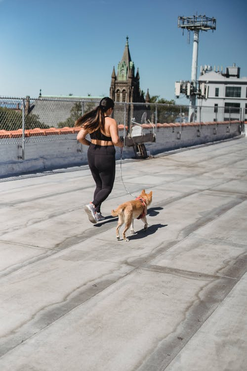 Full body back view of unrecognizable female runner having cardio training with dog on leash in sunny day
