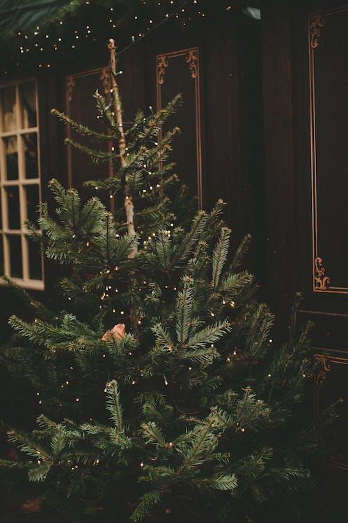 Green Christmas Tree With Orange Cat