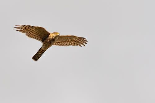 Imagine de stoc gratuită din adult, animal, aviar