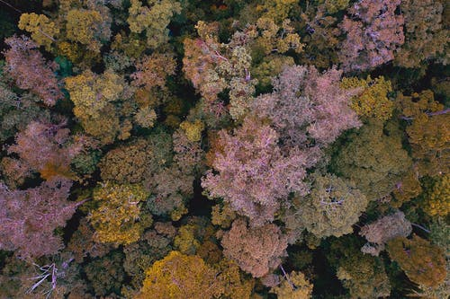 Spectacular drone view of lush colorful trees growing in forest on autumn day