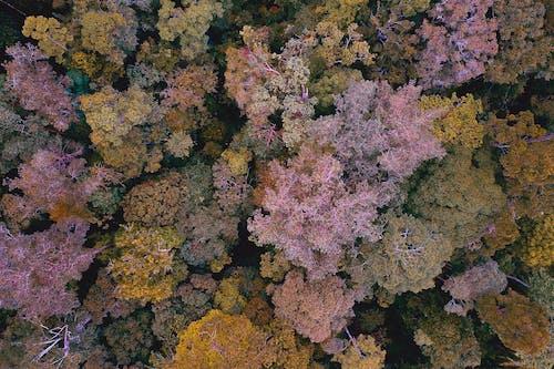 Foto d'estoc gratuïta de aigua, arbre, color, coloració