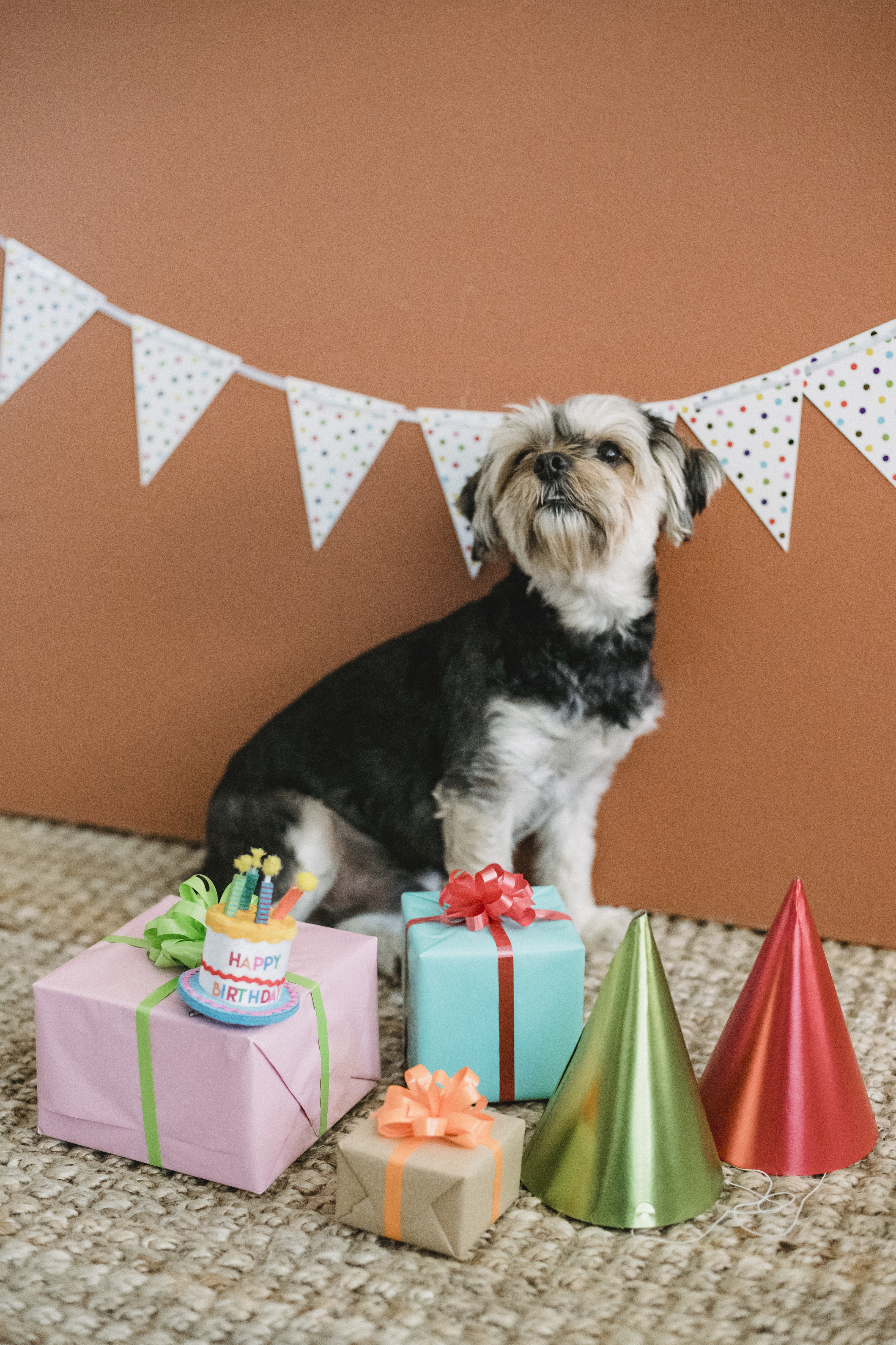 puppy sitting among gift boxes for birthday