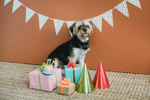 Cute dog surrounded by gift boxes