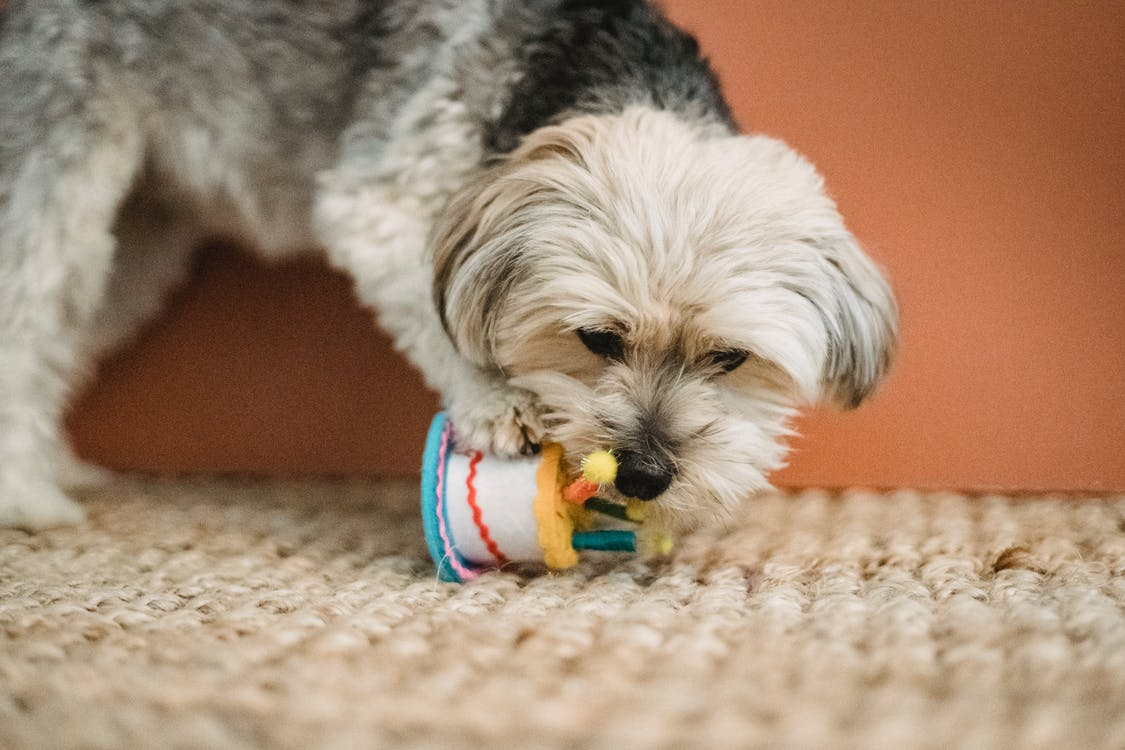 Curious puppy biting toy for Birthday celebration