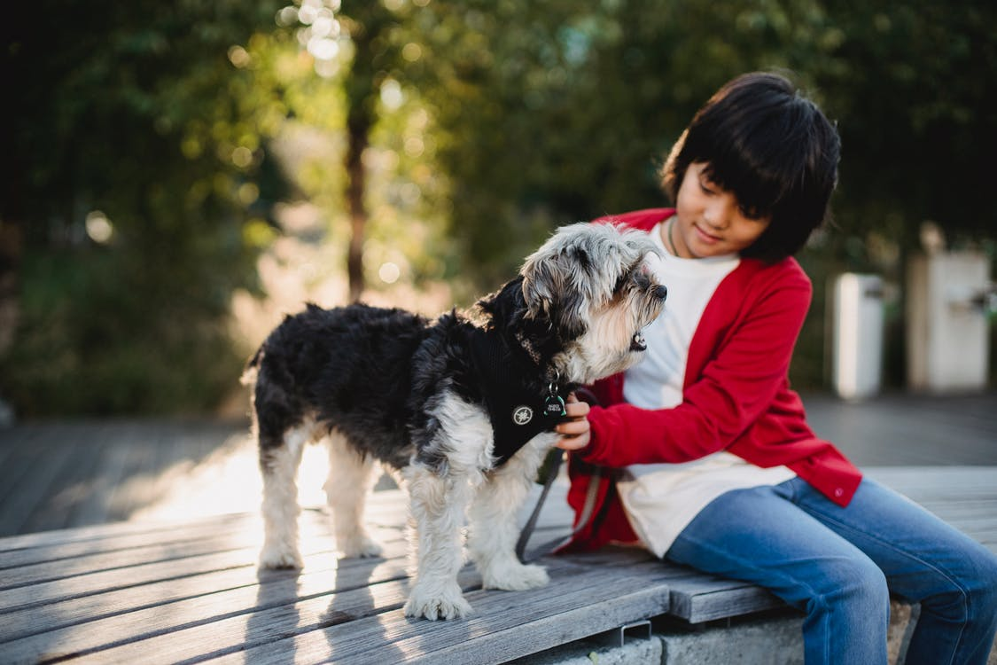 Little girl in casual outfit spending time with dog on bench in street in summer sunny day