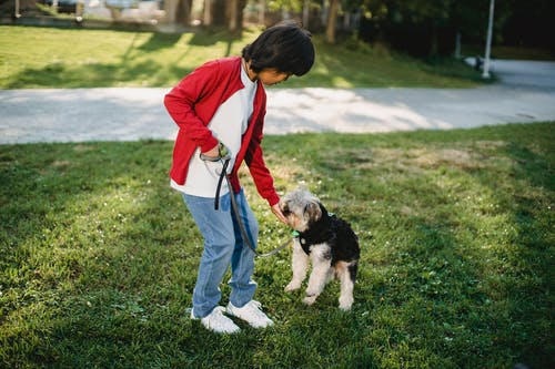 Full length of kid wearing casual clothes walking with dog on green grass in summer sunny day outdoors