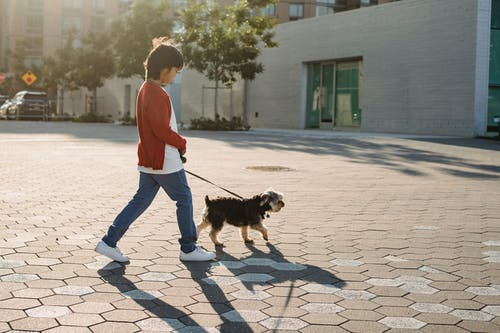 Unrecognizable boy walking with purebred dog on urban pavement