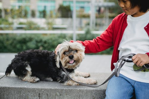 Crop ethnic child stroking adorable purebred dog on leash while resting on cement fence in town