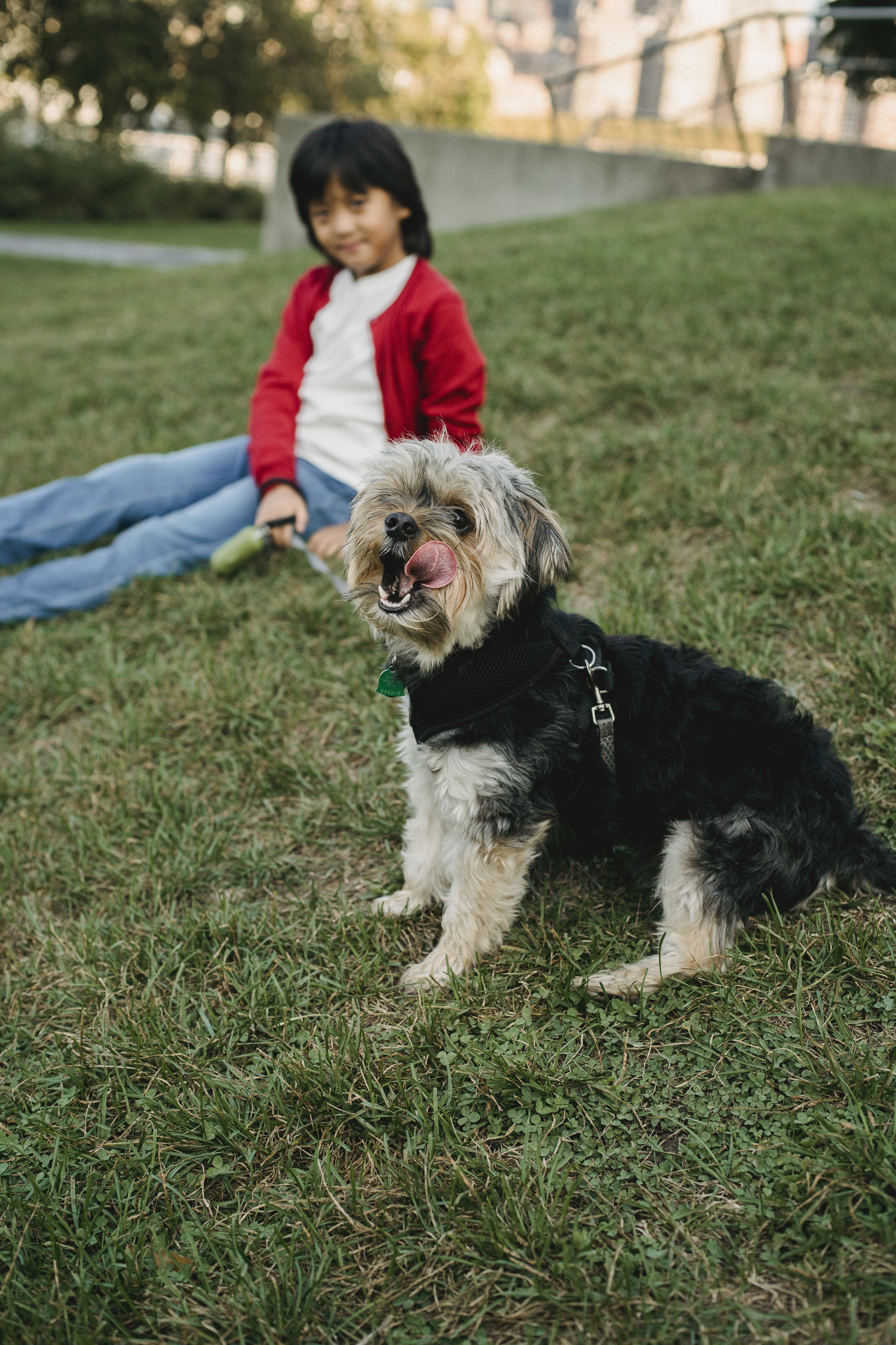 playful dog with asian boy resting on lawn