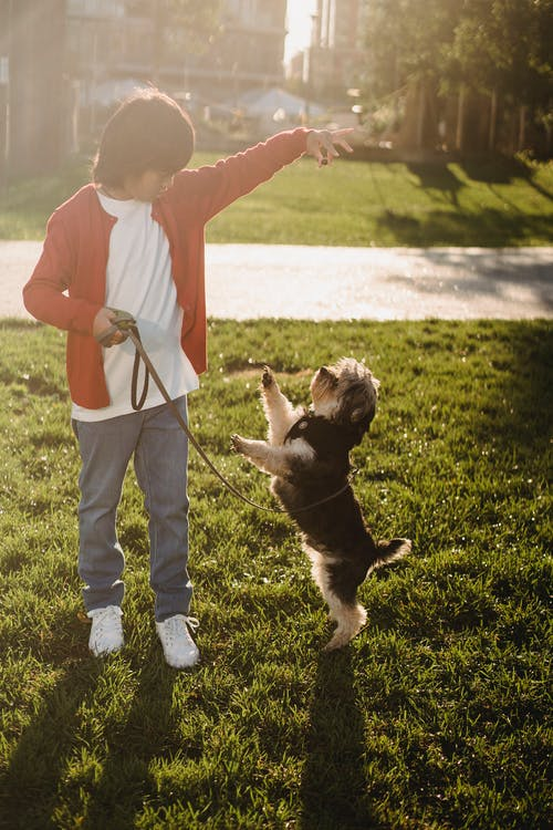 Anonymous Asian kid showing command to dog while training outdoors