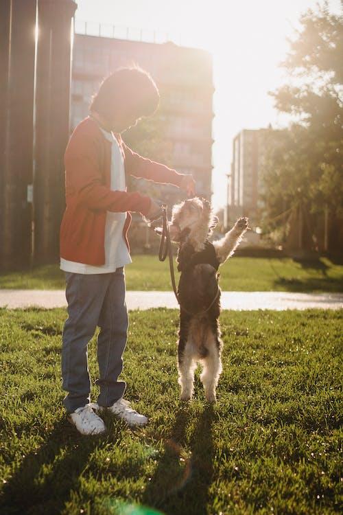Ragazzo Asiatico Irriconoscibile Addomesticare Yorkshire Terrier Sul Prato In Presenza Di Luce Solare