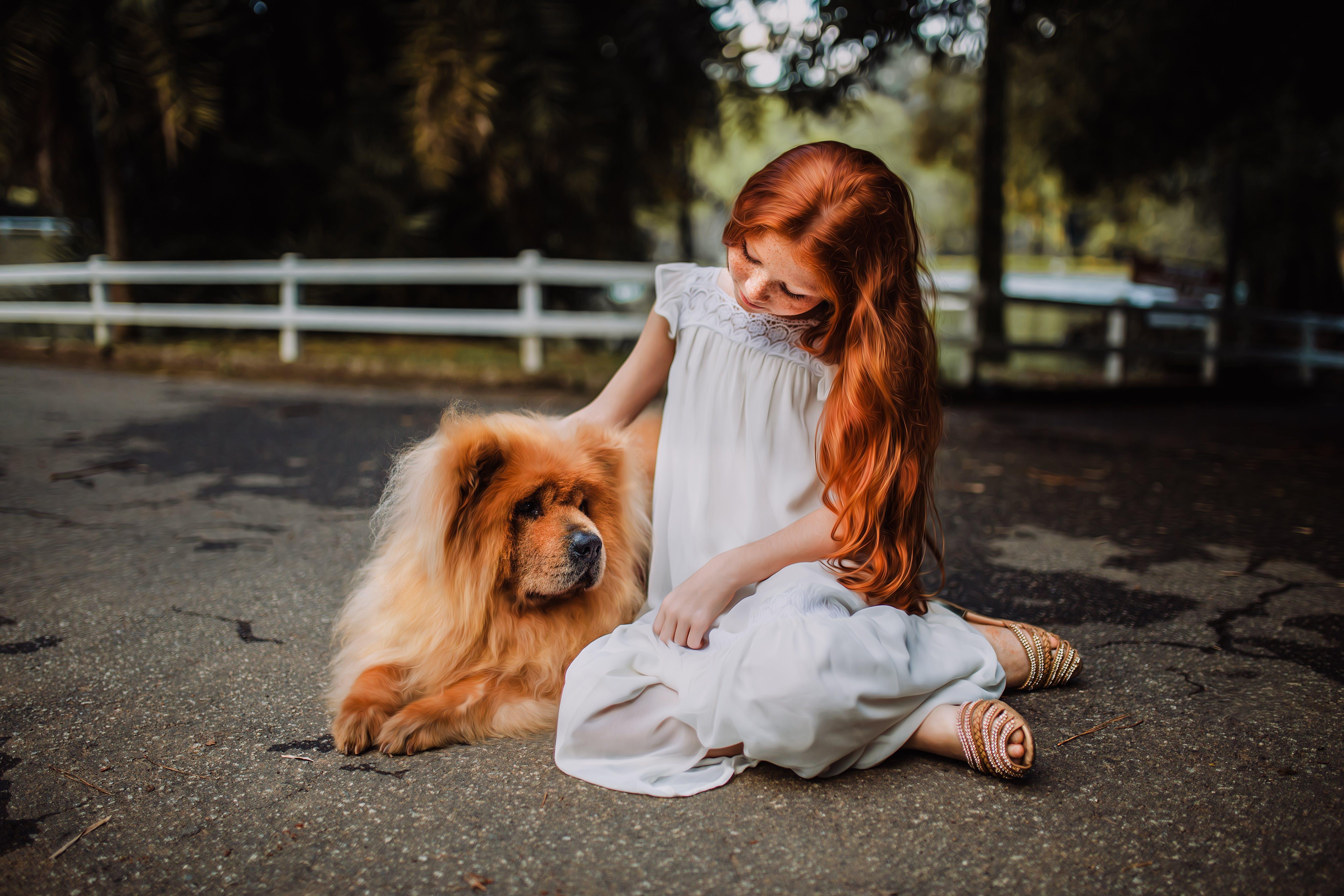 adorable, animal, beautiful