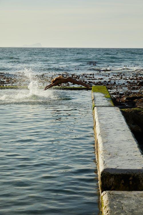 Pájaro Marrón Y Blanco Volando Sobre El Mar
