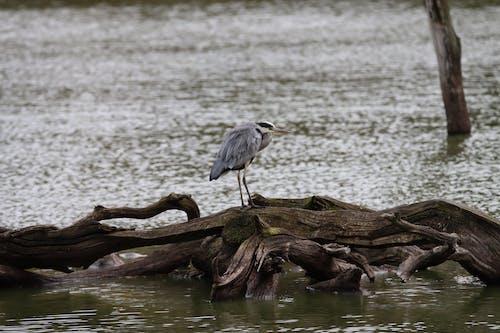 Gray Bird on Brown Tree Trunk