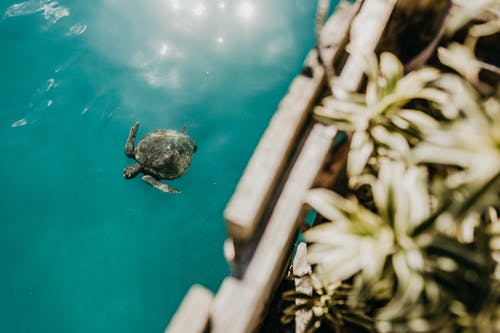 Turtle floating on sea surface in sunlight