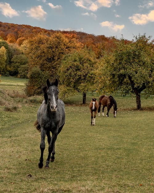 Horses on Green Grass Field