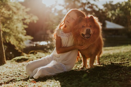 Girl Hugging Adult Chow Chow Sitting on Grass Field